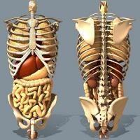 Comprendre l'ostéopathie viscérale, musculo-squelettique, crânienne, tissulaire...